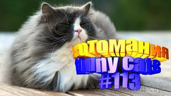 Смешные коты | Приколы с котами | Видео про котов | Котомания #113