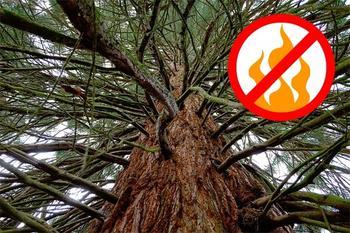 6 мифов о деревьях, в которые мы всё еще верим