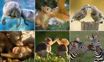 Влюблённые животные
