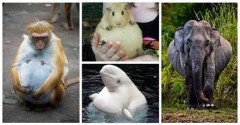 Как мило выглядят беременные животные