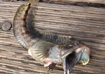10 жутких водных существ, достойных собственного фильма ужасов