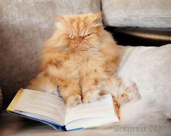 Злобный кот Гарфи, который ненавидит всех и каждого