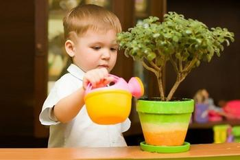 Растения безопасные для детей и животных