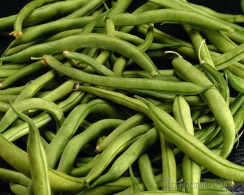 Лучшие сорта фасоли: описание и выращивание