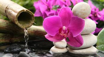 Семена орхидеи: секреты проращивания, как вырастить орхидею в домашних условиях