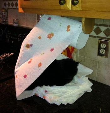 Милые коты, которые спят в странных местах и позах