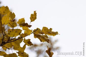 Кружит лист осенний на ветру... (Стих)