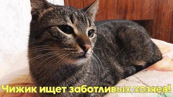 Кошку с тремя котятами подбросили под подъезд. Остался один Чижик, которому нужен дом.