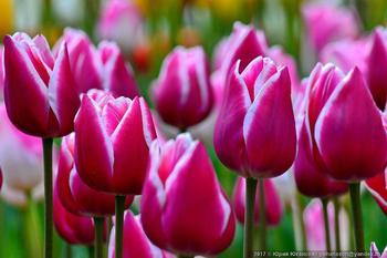Крымская весна в ботаническом саду