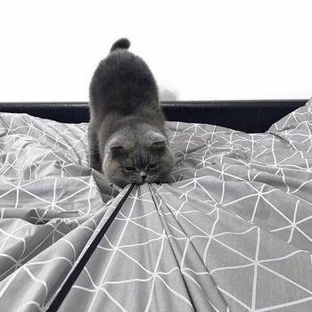 14 причин никогда не заводить котиков