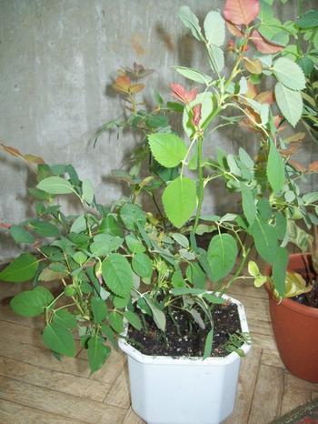 Как оживить комнатные растения