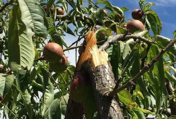Если сломалась ветка: как помочь дереву