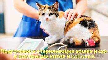 Как подготовить животное к стерилизации или кастрации. Советы ветеринарного врача