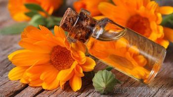 Лечебные свойства календулы лекарственной