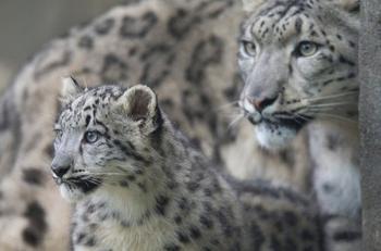 Милые детёныши со своими мамами