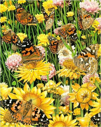 Карен Ллойд-Джонс. Бабочки