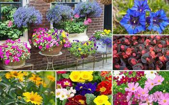 Как купить рассаду цветов: 7 важных правил
