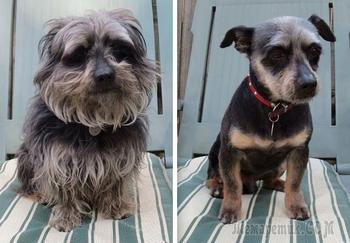 15 примеров прелестного преображения собак после весенней стрижки