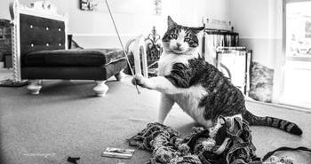 Итальянские кошки, которые ходят на работу как домой