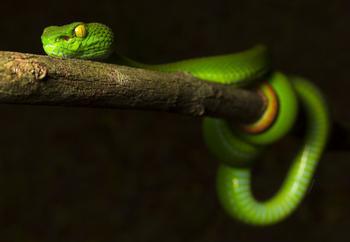 Яркие, грациозные и опасные змеи - 30 фотографий