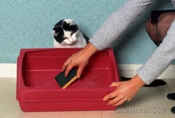 Запах кошачьего туалета не потревожит, или Практичные советы по устранению неприятного аромата