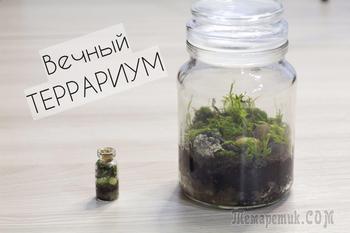 Как сделать вечный террариум