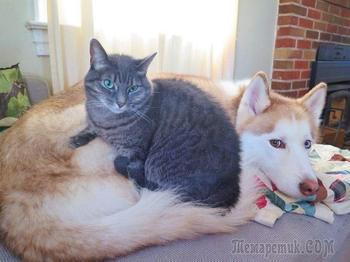 Смешные фотографии кошек и собак, которые не умеют пользоваться кроватями