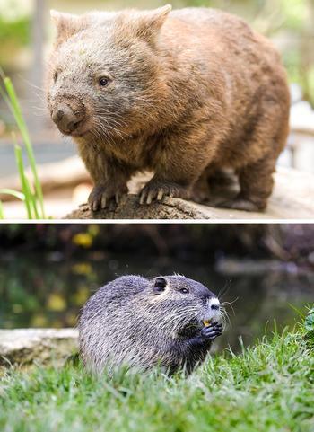 Отличите одно животное от другого