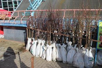5 самых частых вопросов об осенней посадке деревьев