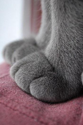 18 фотографий кошачьих лапок, которые гарантированно заставят вас чувствовать себя лучше