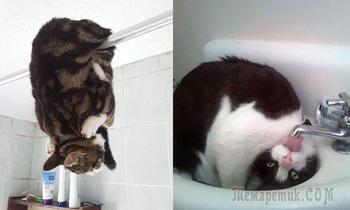 Несколько фотодоказательств, что кошки — инопланетяне, позабывшие о маскировке