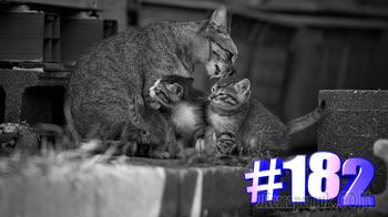 Смешные коты | Приколы с котами | Видео про котов | Котомания # 182 (видео)