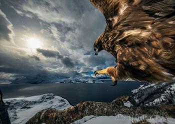30 лучших фотографий дикой природы с фотоконкурса «Wildlife Photographer of the Year 2019»