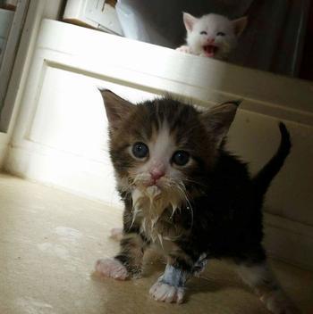 17 котиков, которые служат иллюстрацией поговорки «кушайте, не обляпайтесь»