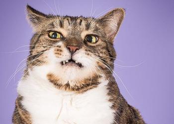 Эй, толстый! Фото упитанных котов, которых, скорее всего, не пустят в салон самолета