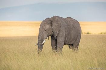Интересное о слонах