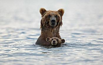 15 трогательных снимков из мира животных