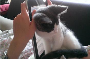 15 котов, которые и не подозревают, что у вас есть личное пространство