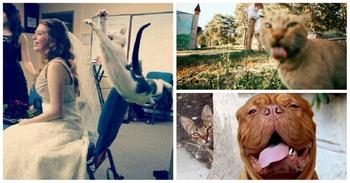 Непревзойденные фотобомберы: кошки, которые готовы пойти на все ради всеобщего внимания