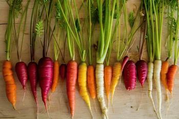 Классификация сортов моркови