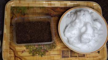 Необычный способ посева петунии