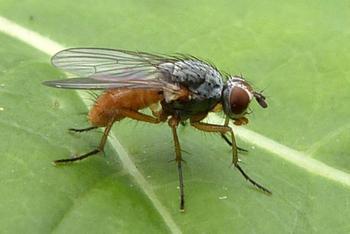 3 вредителя, от которых не помогут пестициды