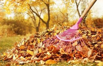 Нужно ли убирать опавшую листву из сада и огорода осенью