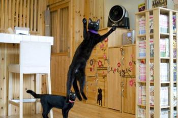 Котокафе с чёрными кошками