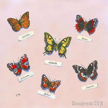 Коллекция  бабочек (Стих)