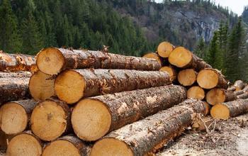 Стало известно о дефиците древесины для строительства домов в России
