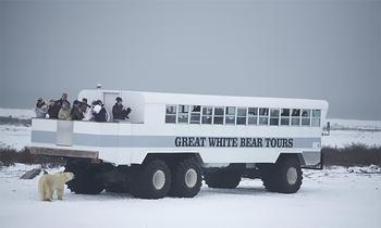 Ночь с белыми медведями: первый арктический отель на колесах