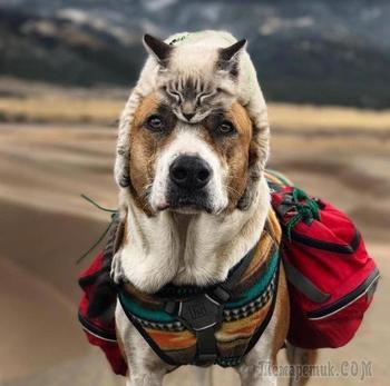 Эти кошка с собакой обожают путешествовать вместе и их фотографии эпично умилительны