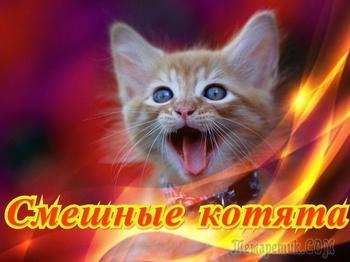Смешные котята