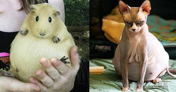 Милые фотографии беременных животных